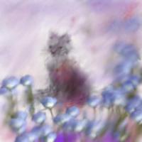 Кошка в тумане (акварель, размывка)